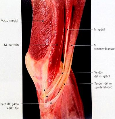pata-de-gallo-malaga (2)